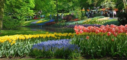 Keukenhof i Holland planter enorme mængder af blomsterløg