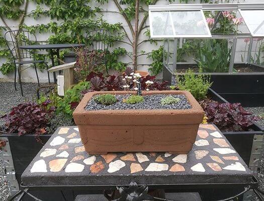 Lille betonkumme med alpine planter