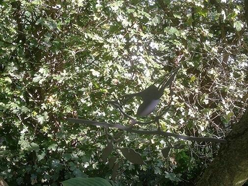 Metalbird silhuet af spætmejse