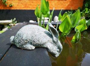 Hare på bassinkant i Egeshave