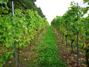 Vinmark hos Agger Vin