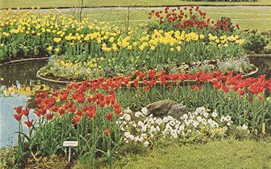 Langesø tulipaner